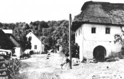 schaflein